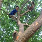 子ども木登り